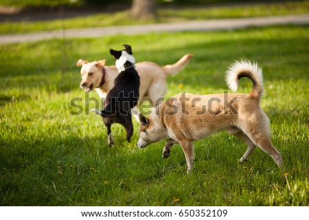 Three dogs walking on green grass in the park