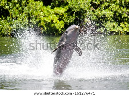 Three dolphins float in sea water ... - stock photo