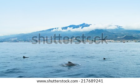 three dolphins swimming in atlantic ocean near las americas, tenerife, canary islands - stock photo