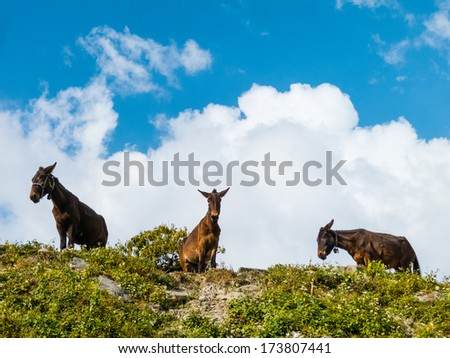 Three donkeys on top of a hill - stock photo
