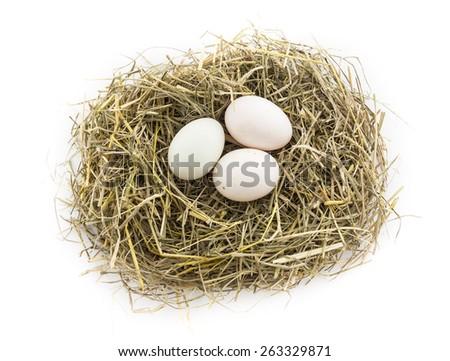 three duck egg in nest - stock photo