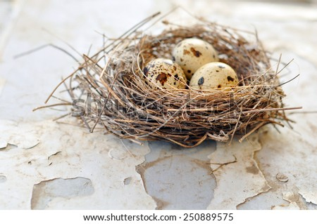 Three eggs in a bird nest