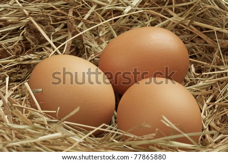Three eggs in a straw nest