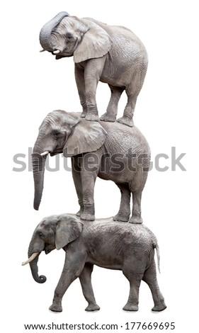 Three elephants.  - stock photo