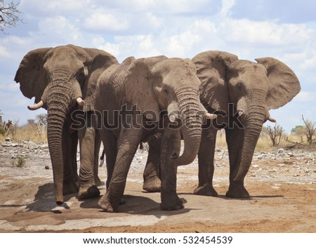 three elephants in Africa