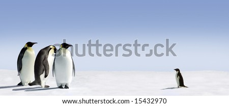 Three emperor penguins are met by an adelie penguin - stock photo