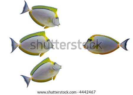 Three excited fishes are talking to one beautiful fish. A highly versatile conceptual image. - stock photo