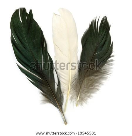 Three feathers on white background - stock photo