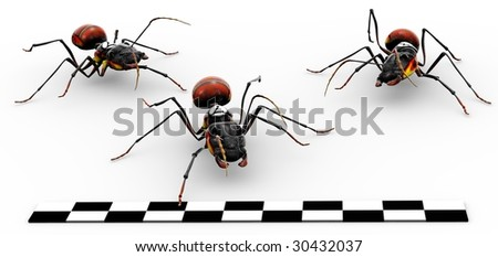 Three fire ants crossing the finish line. - stock photo