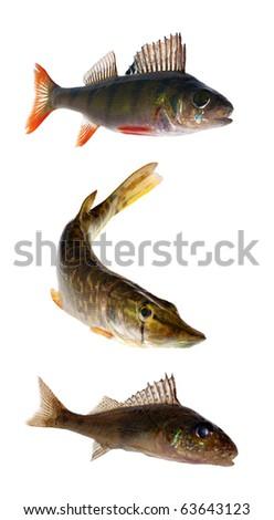 three fishes isolated on white background - stock photo