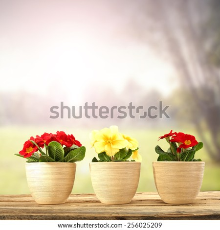 three flowers  - stock photo