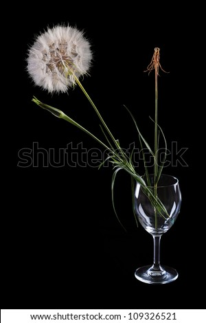 three flowers in a glass of dandelion on a black background - stock photo