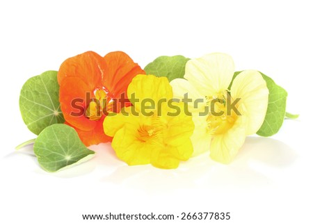 three flowers nasturtium with leaves on a light background - stock photo