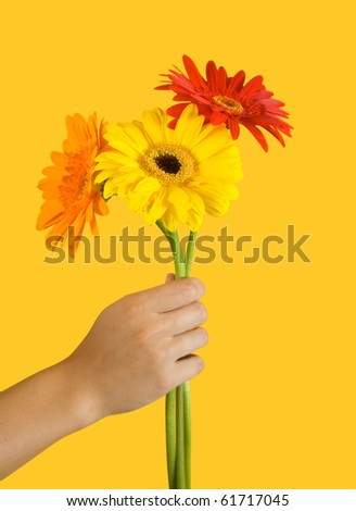 Three flowers of gerbera on yellow background