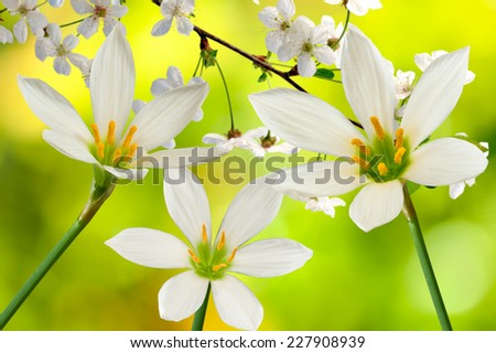 three flowers on a yellow background - stock photo