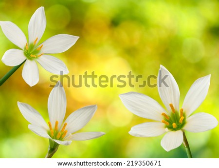 three flowers on a yellow background closeup - stock photo