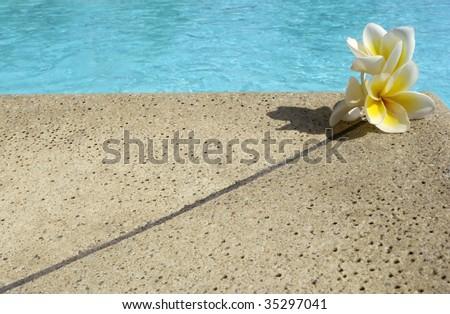 Three frangipane's flowers on swimming pool border - stock photo