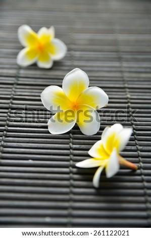 three frangipani on bamboo mat  - stock photo
