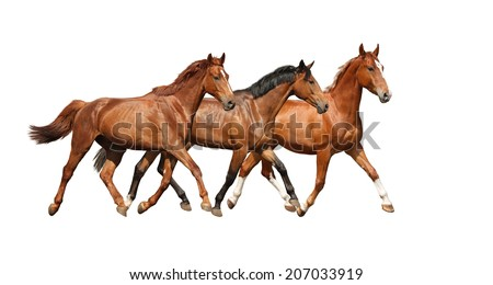 Three free beautiful horses happily trotting on white background - stock photo