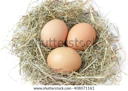 Three fresh brown chicken eggs lie in a nest of hay on white background