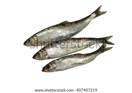 three fresh herrings on white background - stock photo
