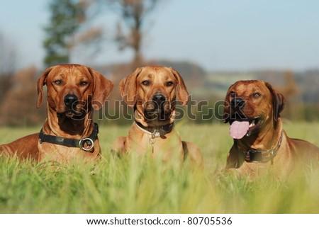 Three friends - stock photo