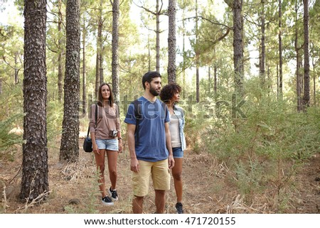 Three friends happily strolling through a pine tree plantation in the late afternoon sun while wearing casual clothing