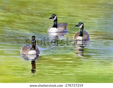 Three Geese with Pond Reflections.  Watercolor painting, illustration, of three geese swimming on a pond with reflections of blue and green - stock photo