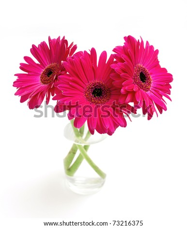 three gerbera in a glass on white background