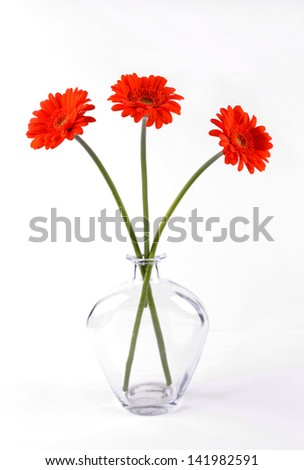 Three gerberas symmetrically arranged in a clear glass vase