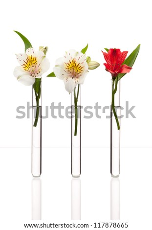 Three glass test tubes with two white flowers and one red standing in line, isolated on white. Concept of individuality, creativity, one-of-a-kind. - stock photo