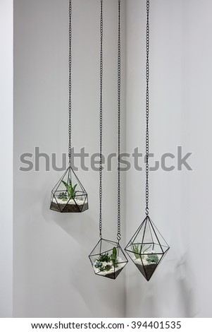 Three glass vases with metallic frames. The vases are hanging on chains on the gray wall background. Inside vases there are plants, ground and pebbles.  - stock photo