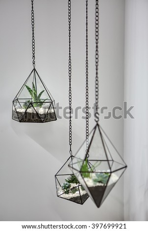 Three glass vases with metallic frames. The vases are hanging on chains on the gray wall background. Inside vases there are plants, ground and pebbles. Focus is on the far vase. Close-up photo.  - stock photo