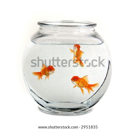 Three Goldfish Swimming in a Bowl