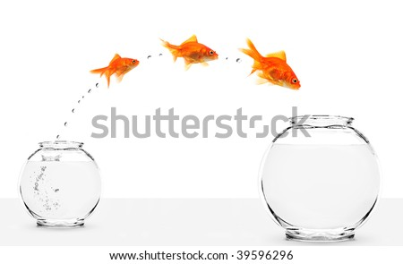 three goldfishes jumping from small to bigger bowl isolated on white background