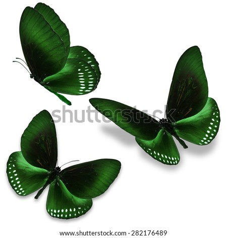 Three green butterfly, isolated on white background - stock photo