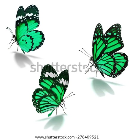 Three green monarch butterfly isolated on white background