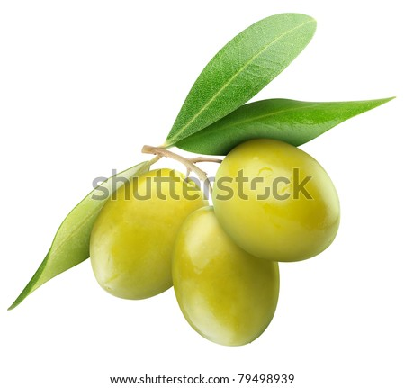 Three green olives on branch with leaves isolated on white - stock photo