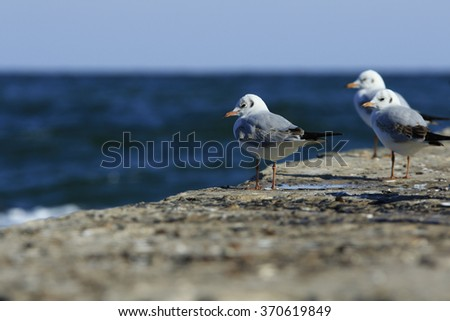 three gulls take a rest on a pier at the sea