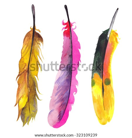 Three hand drawn watercolor paradise bird feathers. Isolated on white background - stock photo