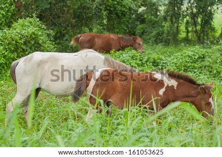 three horse eating plant in garden