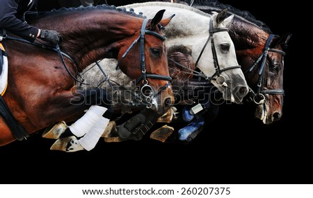 Three horses in jumping show, on black background isolated - stock photo