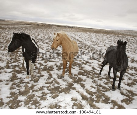 Three horses in winter pasture - stock photo