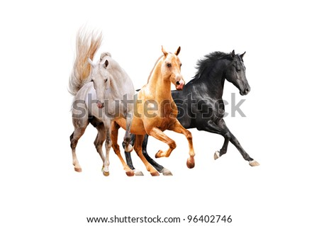 three horses isolated on white - stock photo