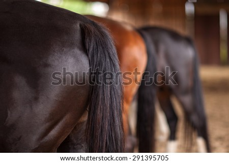 Three horses of different colors behind sharpness on first horse - stock photo