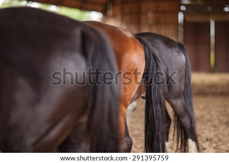 Three horses of different colors behind sharpness on the second horse - stock photo