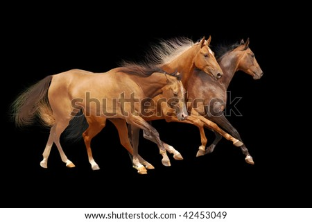 three horses on black - stock photo