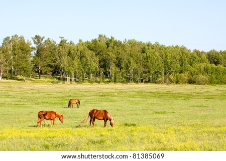 Three horses on the meadow.
