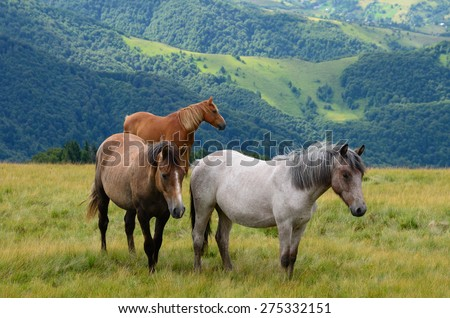 Three horses on the mountain pasture with mountains in the background - stock photo