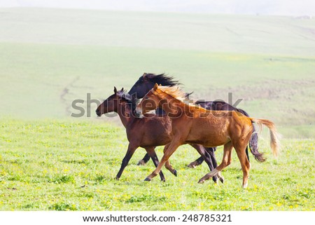 Three horses run on a mountain pasture, the Caucasus, Russia - stock photo